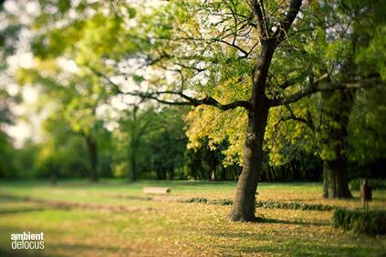ambient park