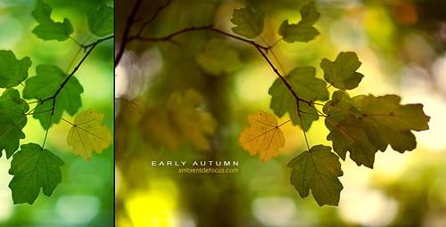 autumn motive